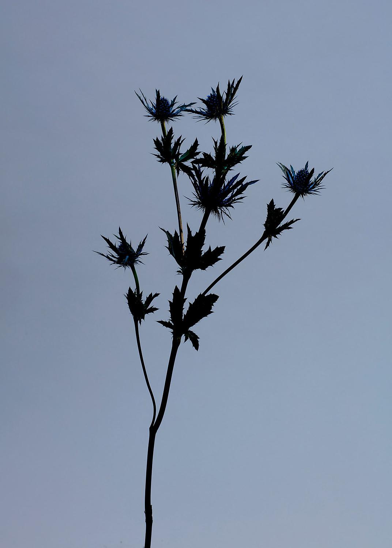 Flowers_380